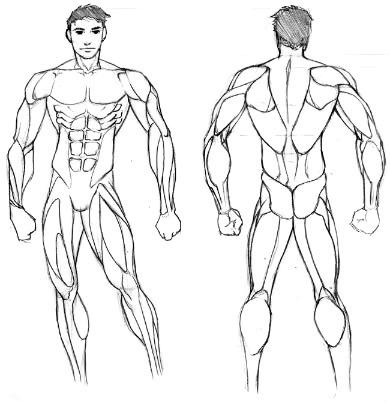Muskeln zeichnen