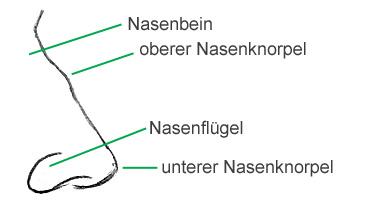 Eine Nase Zeichnen Lernen