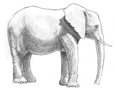male poni malen und zeichnen