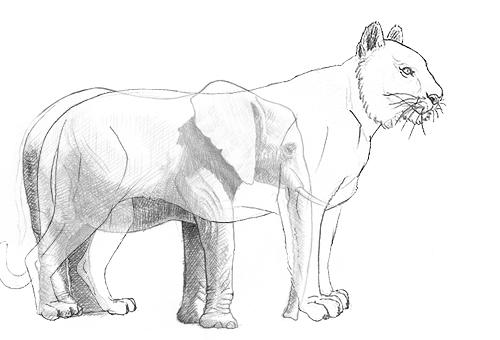 einen elefant malen  zeichnen