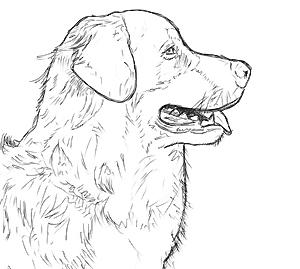 Hunde & Katzen malen und zeichnen