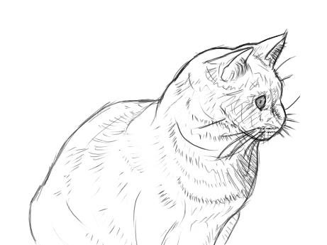 seiten tiere zeichnen hund katze malen