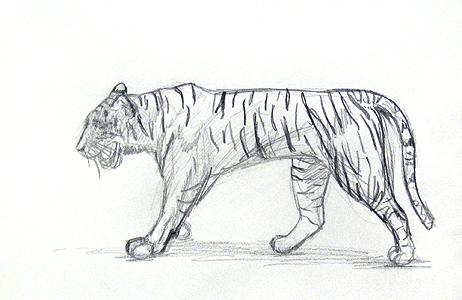 Tiere zeichnen lernen das tier ist fertig niedlich oder