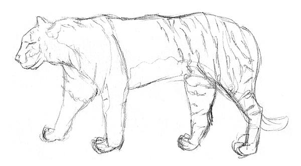 Einen Tiger Malen Und Zeichnen