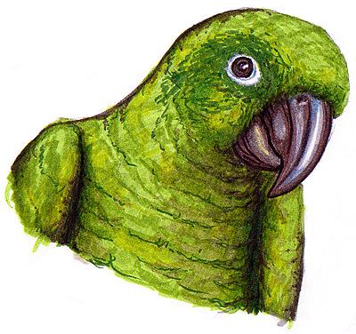 Vögel Malen Und Zeichnen