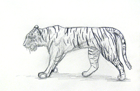 Learn to draw Animals: detailed outlines of the tiger