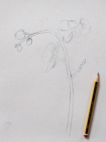 Orchidee Zeichnen Malen Zeichnen Lernen