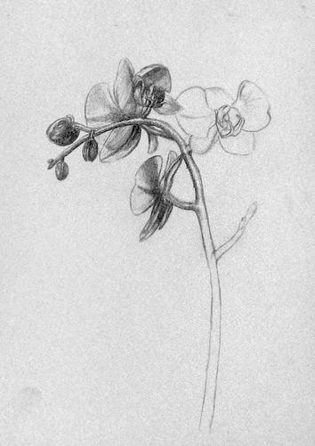 orchidee zeichnen malen zeichnen lernen. Black Bedroom Furniture Sets. Home Design Ideas