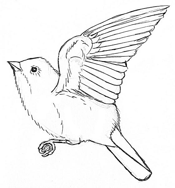 fliegender vogel zum ausmalen  malvorlagen